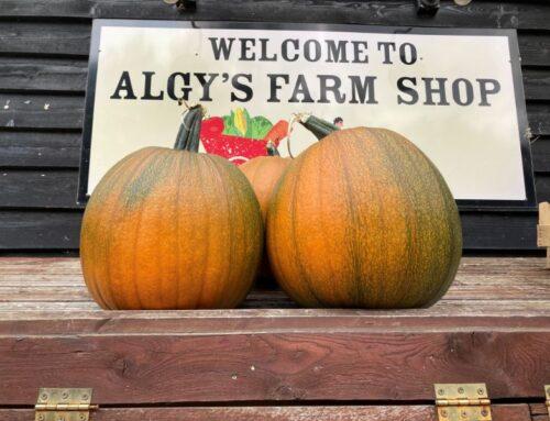 Pumpkin Picking & Seasonal Produce
